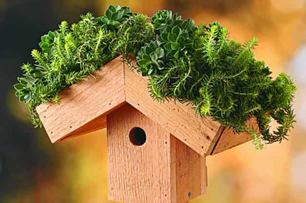 diy-bird-houses-5